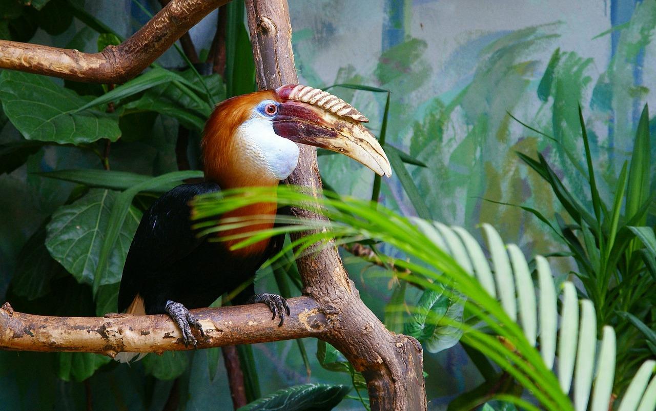 bird-289799_1280