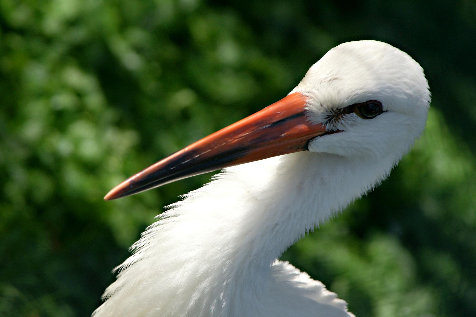 stork-180568_1920