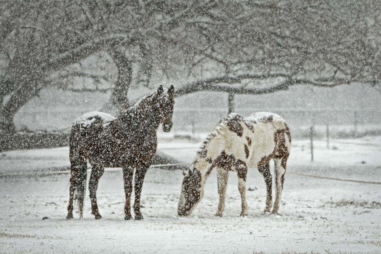 Žiemos pramogos, kelionės Lietuvoje (4)